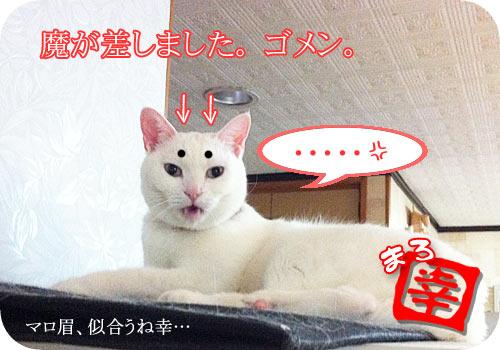 【白猫にマロ眉】魔が差しました【似合う】
