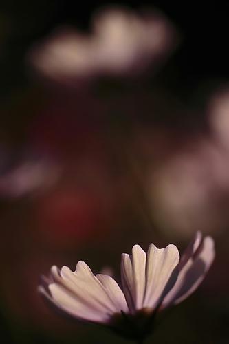_MG_4844.jpg