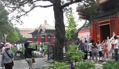 北京 紫禁城 庭