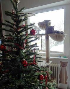 weihnachtsbaum-2010.jpg
