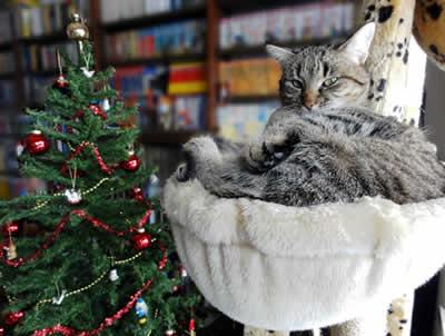 クリスマスツリーとミミ