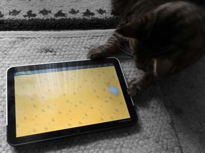 猫用ゲームで遊ぶミミ