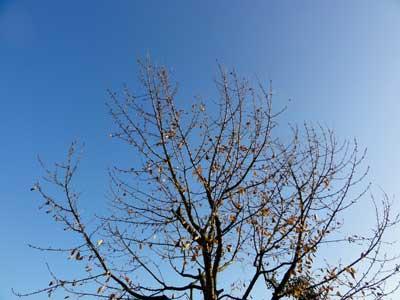 冬の晴天日