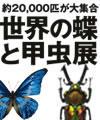 世界の蝶と甲虫展