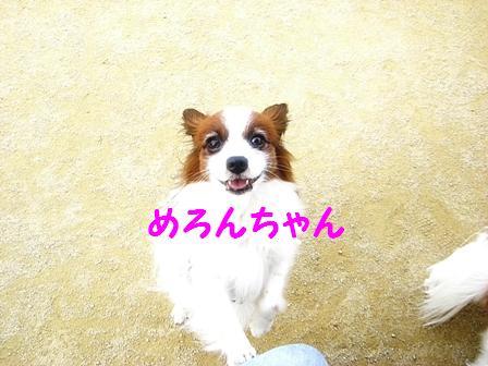 http://blog.cnobi.jp/v1/blog/user/50f79716f6984938962b16e2c7a8883e/1301919147