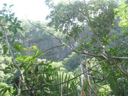 iriomote_jungle_231008.JPG