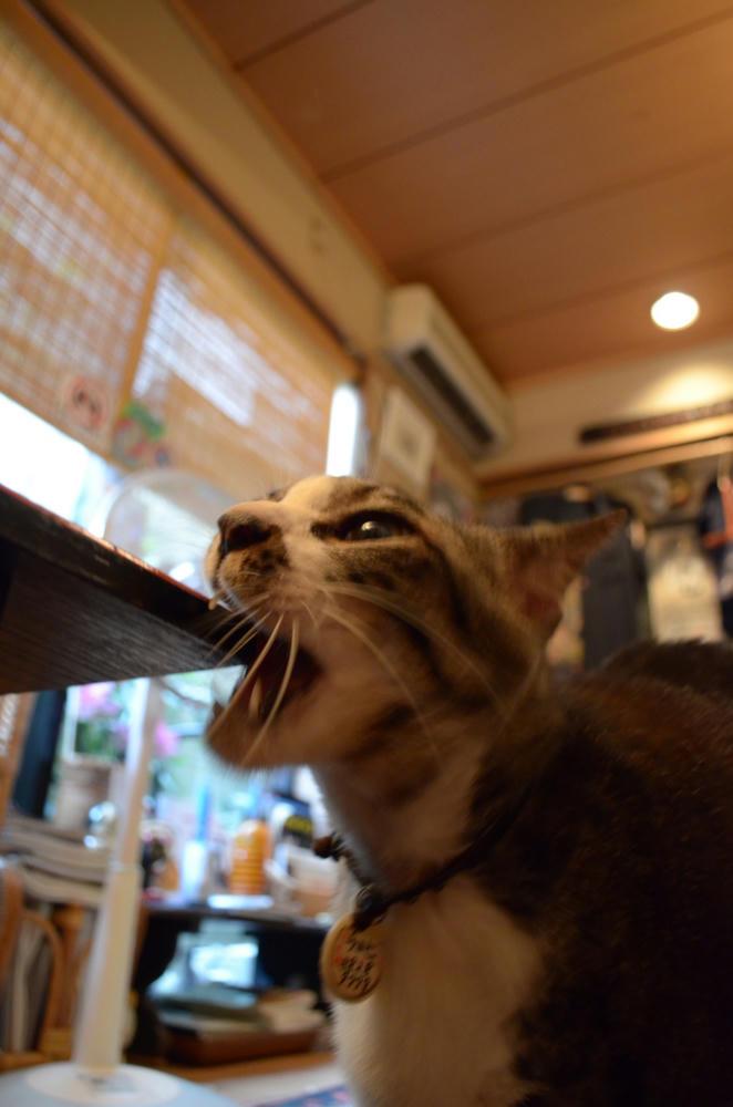 ねんねこ家、猫がいることもある喫茶店