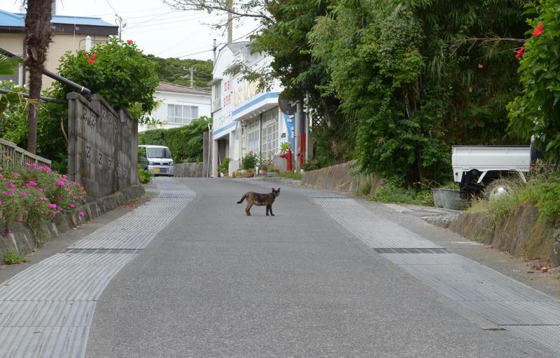 [東京都の離島][外編] 島で会った野良猫たち