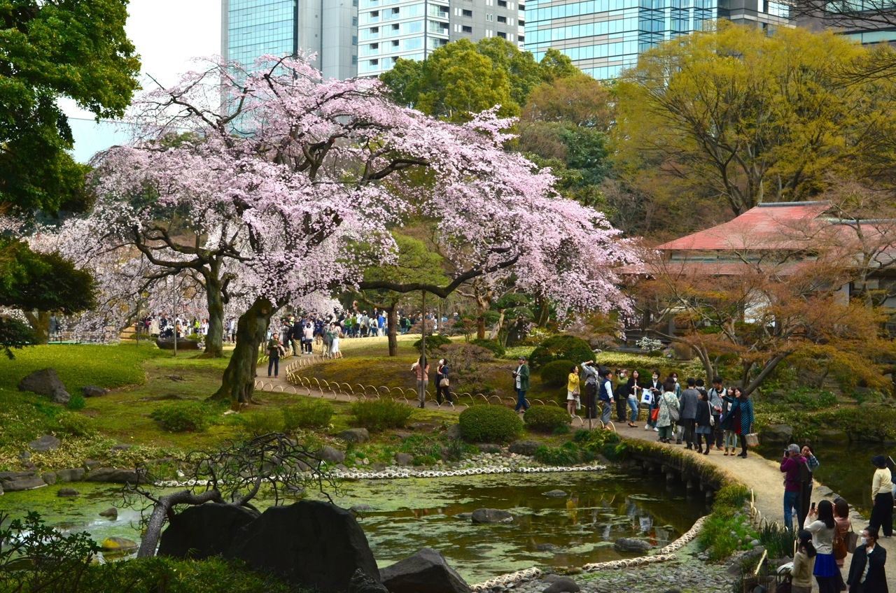 Sakura 2014 06