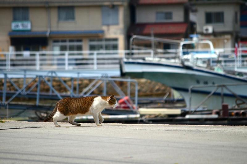 はじめて猫島に行ってきた