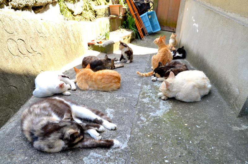 猫島、香川県にある男木島に行ってきた