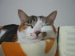 寝ていて聞いていません。