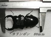 P1100278.JPG