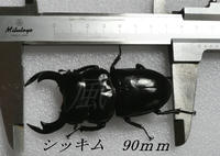 P1100288.JPG