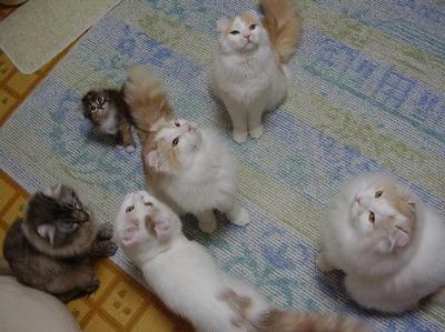 我が家のネコ全員(ハユ以外)