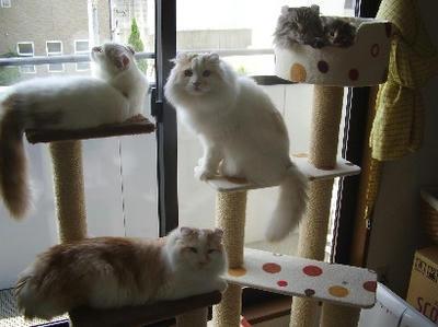 我が家のネコ、ハユとマホ以外