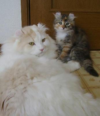 左・サスケ。右・コノハ
