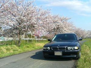 E38 BMW 750iL と桜