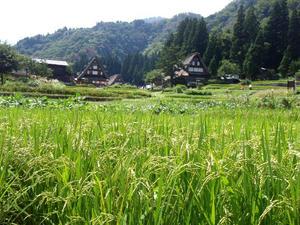 白川郷と五条山の合掌造り集落 相蔵合掌集落