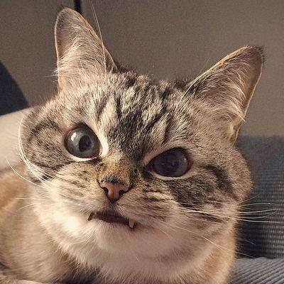 ヴァンパイア猫