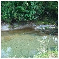 キレイな川で