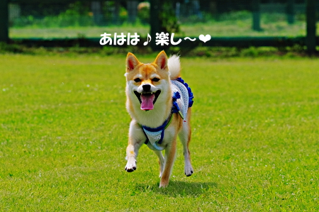 http://blog.cnobi.jp/v1/blog/user/5372066eaa7f42ee290a4176dda1b356/1375837459