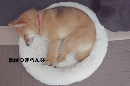 http://blog.cnobi.jp/v1/blog/user/5372066eaa7f42ee290a4176dda1b356/1393761793