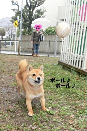 http://file.udon.sakeblog.net/CIMG0640.JPG