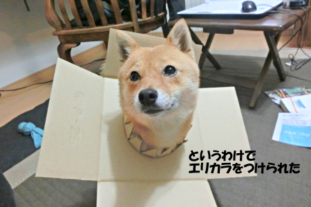 http://file.udon.sakeblog.net/CIMG0693.jpg