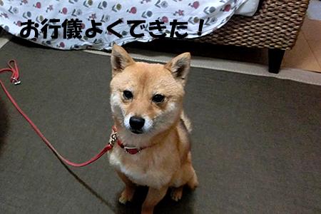 http://blog.cnobi.jp/v1/blog/user/5372066eaa7f42ee290a4176dda1b356/1395840960