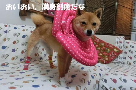 http://blog.cnobi.jp/v1/blog/user/5372066eaa7f42ee290a4176dda1b356/1396778867