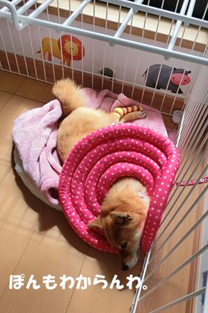 http://file.udon.sakeblog.net/CIMG0754.jpg