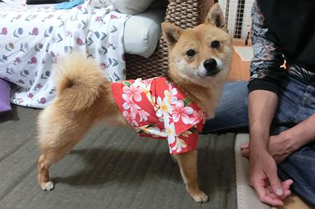 http://file.udon.sakeblog.net/CIMG0848.jpg