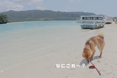 http://blog.cnobi.jp/v1/blog/user/5372066eaa7f42ee290a4176dda1b356/1398312764
