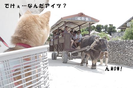 http://blog.cnobi.jp/v1/blog/user/5372066eaa7f42ee290a4176dda1b356/1398586930