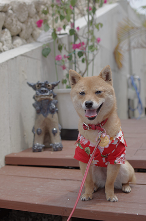 http://blog.cnobi.jp/v1/blog/user/5372066eaa7f42ee290a4176dda1b356/1398857791