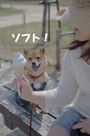 http://file.udon.sakeblog.net/IMGP2969.jpg