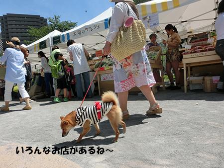 http://file.udon.sakeblog.net/CIMG1077.jpg