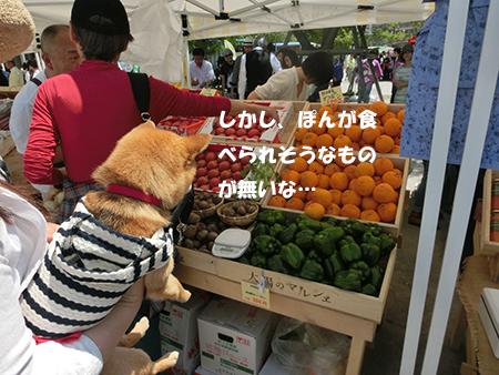 http://blog.cnobi.jp/v1/blog/user/5372066eaa7f42ee290a4176dda1b356/1399798415