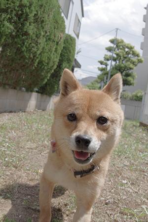 http://file.udon.sakeblog.net/IMGP3278.jpg