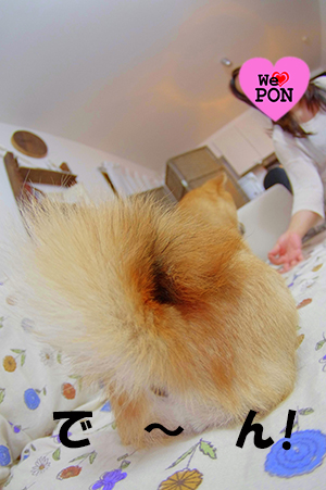 http://file.udon.sakeblog.net/IMGP3371.jpg