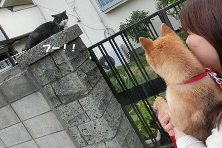 http://blog.cnobi.jp/v1/blog/user/5372066eaa7f42ee290a4176dda1b356/1400845975