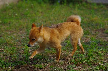 http://file.udon.sakeblog.net/IMGP3416.jpg