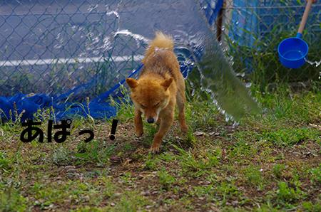 http://blog.cnobi.jp/v1/blog/user/5372066eaa7f42ee290a4176dda1b356/1401105029