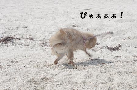 http://file.udon.sakeblog.net/IMGP2170.jpg
