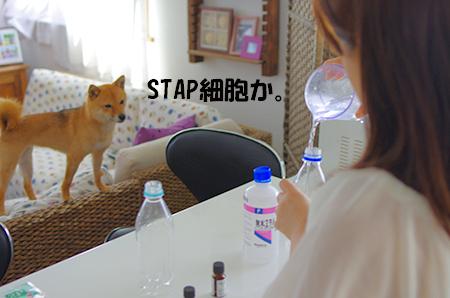 http://file.udon.sakeblog.net/IMGP3453.jpg