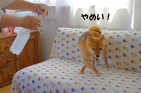 http://blog.cnobi.jp/v1/blog/user/5372066eaa7f42ee290a4176dda1b356/1401447727