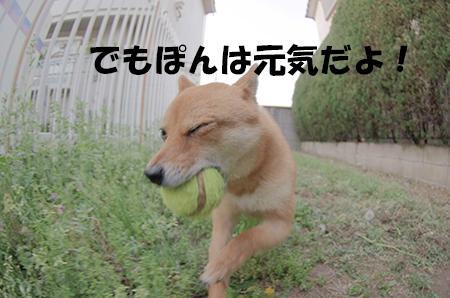 http://blog.cnobi.jp/v1/blog/user/5372066eaa7f42ee290a4176dda1b356/1402834270