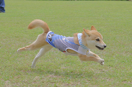 http://file.udon.sakeblog.net/IMGP3857.jpg