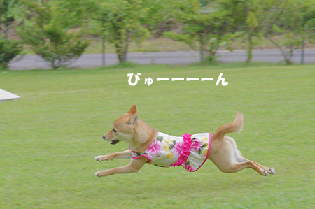 http://file.udon.sakeblog.net/IMGP4016.jpg